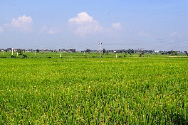 rice-fields-204145_640